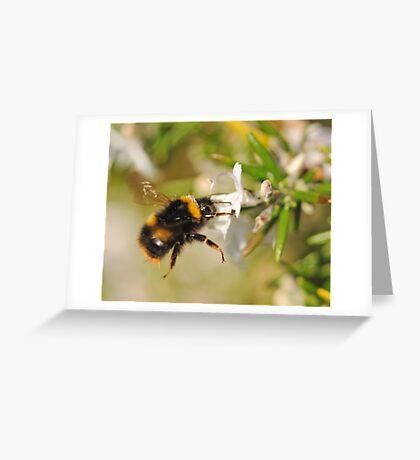 Hovering Bumblebee Greeting Card