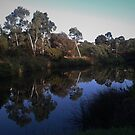 Reflection's on Merri Creek by Digby