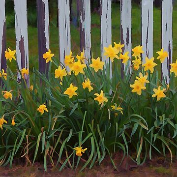 Garden Fence and Daffodils by Osso