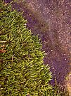 Moss + Concrete by Aaron Campbell