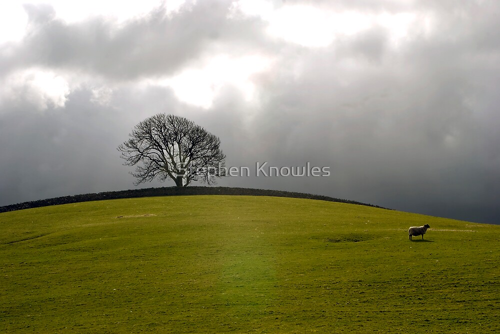 The sheep and the tree by Stephen Knowles