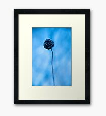 blue one... Framed Print