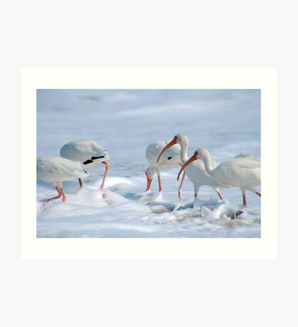 Ibis in Snow? Art Print