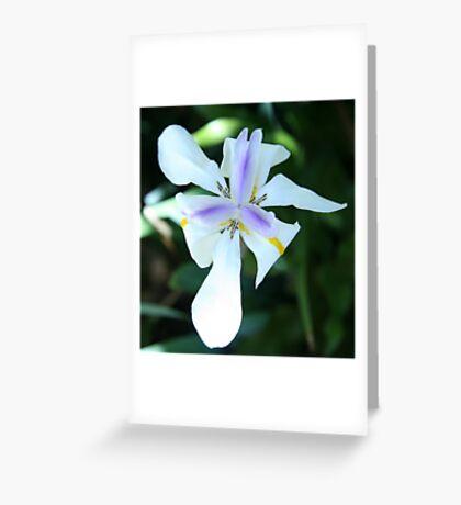 White Iris Australia Greeting Card