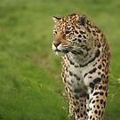 Jaguar by Franco De Luca Calce