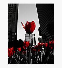 City Dwellers Photographic Print
