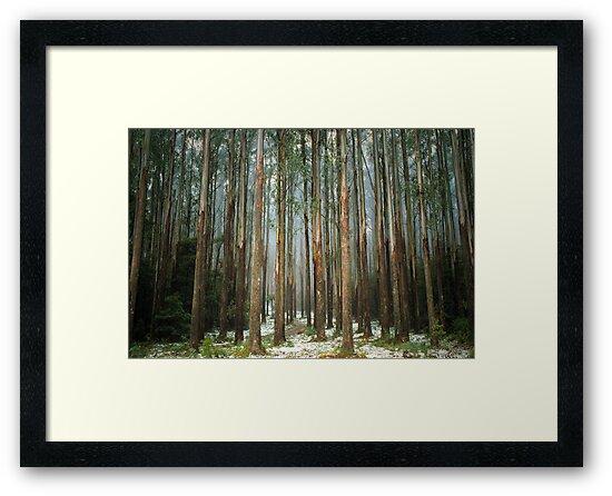 Mountain Ash by Ern Mainka