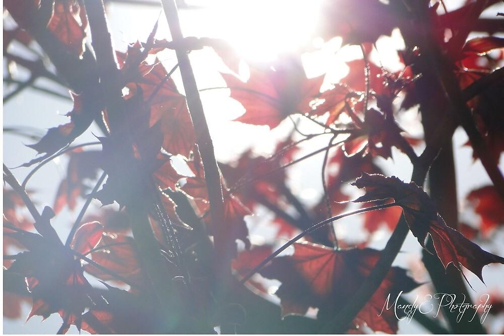A Dark Autumn by Br0wnEyedQueen