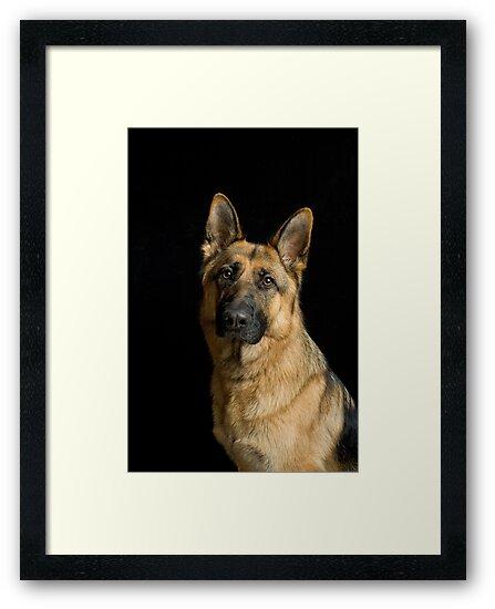 German Shepherd Dog by WendyM