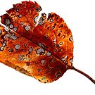 Autumn Leaf 2 by ColourCottage