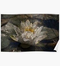 Textured Pond Lily Poster