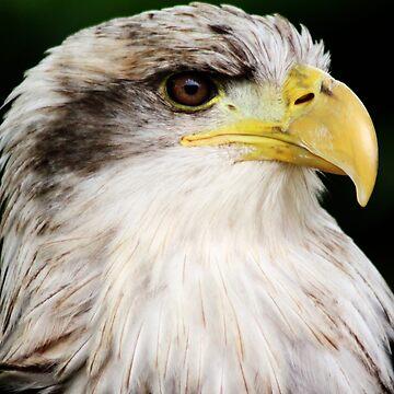 Bird Of Prey by raytylerimages