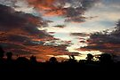 Tropical Twilight - Orange Belly Blanketed Cloudscape  by Kerryn Madsen-Pietsch
