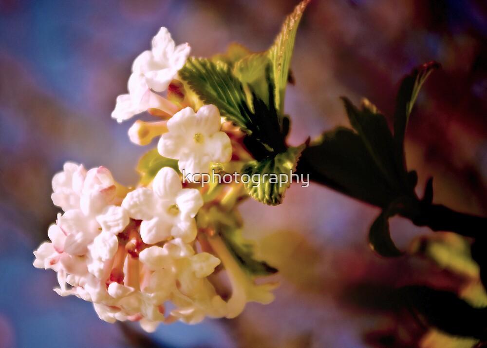 Flowering Cherry by Richard Hamilton-Veal