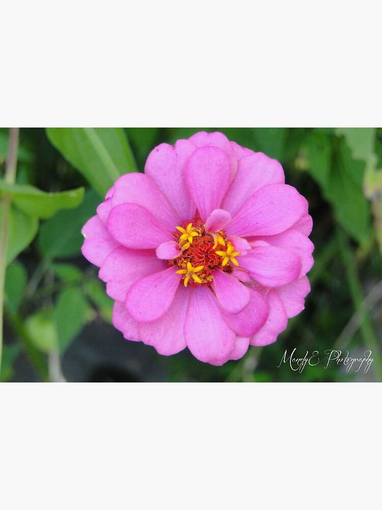 Pink Wildflower #2 by Br0wnEyedQueen