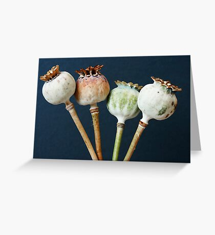 Poppy seed pods Greeting Card