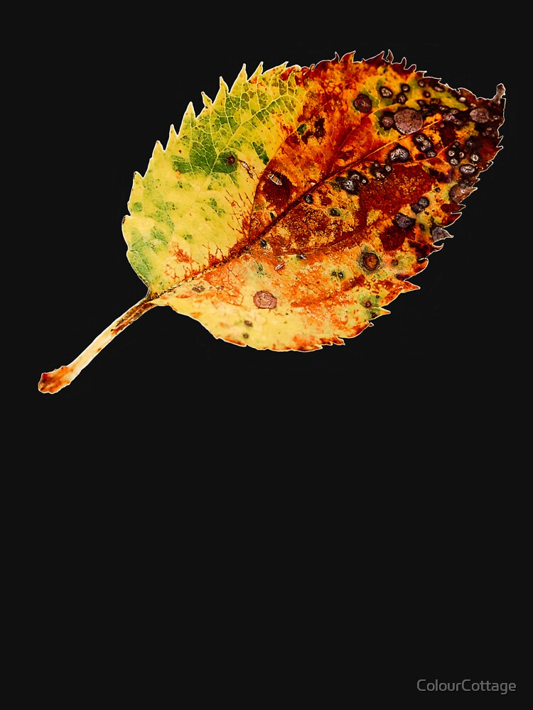 Autumn leaf 1 by ColourCottage