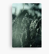 The Wind Cries Mary Canvas Print