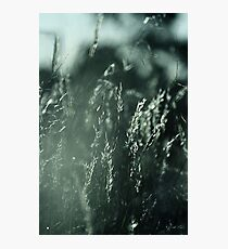 The Wind Cries Mary Photographic Print