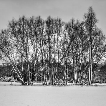 Castle Meadows, Abergavenny  by raytylerimages