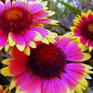 God's Little Beauties by R&PChristianDesign &Photography
