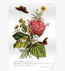 Antiker botanischer Druck - Delphinium - 1749 Poster