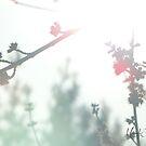 Wonderland #1 by Br0wnEyedQueen