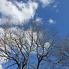Trees in Bud by Kathryn Jones