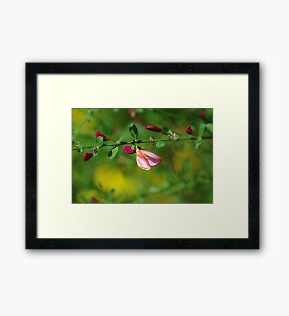 Buds in Watercolor Framed Print