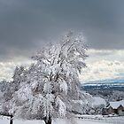 Winter Tree by Valentina Gatewood