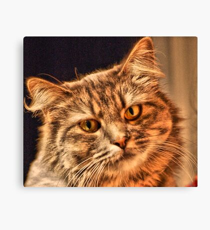 Cat That Have The Look Of Love  Canvas Print
