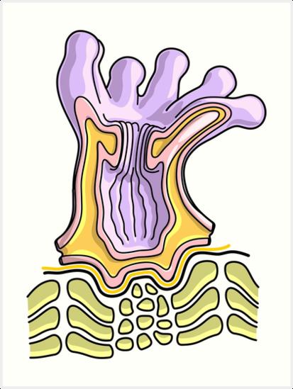 Láminas artísticas «Diagrama de la anatomía del pólipo de coral ...