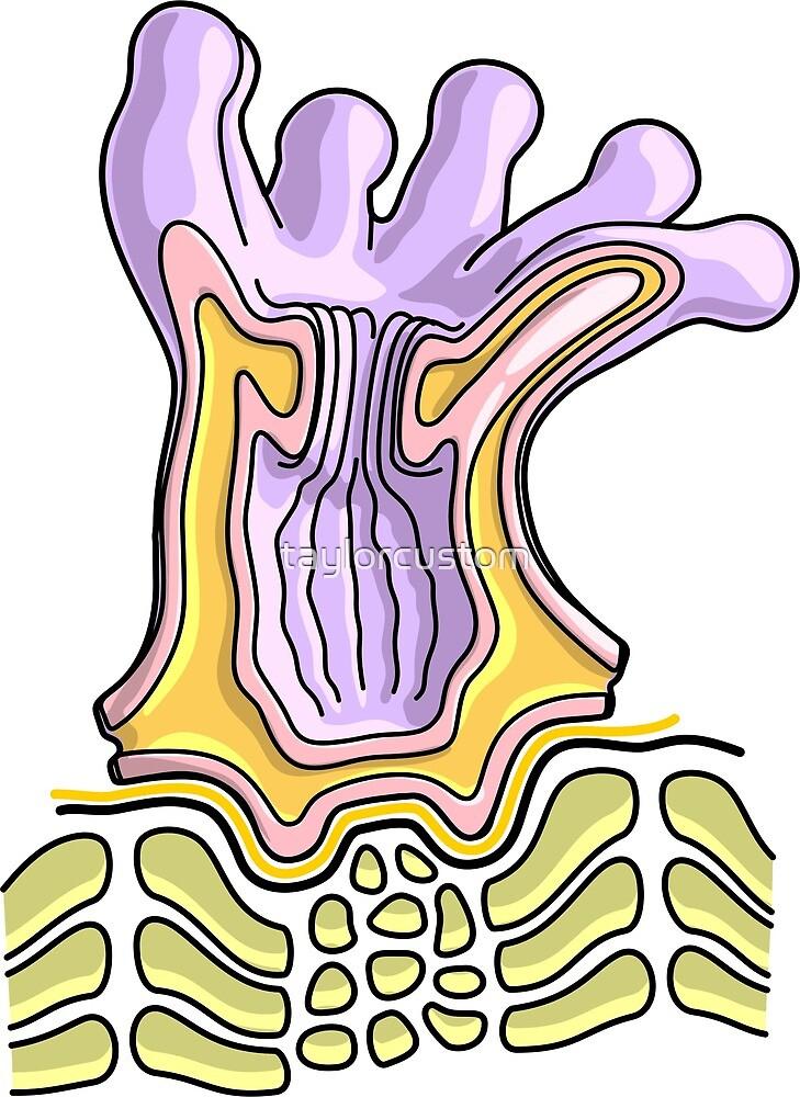 Coral Polyp Anatomy Diagram - Marine Biology Illustration\