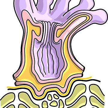 Coral Polyp Anatomy Diagram - Marine Biology Illustration by taylorcustom