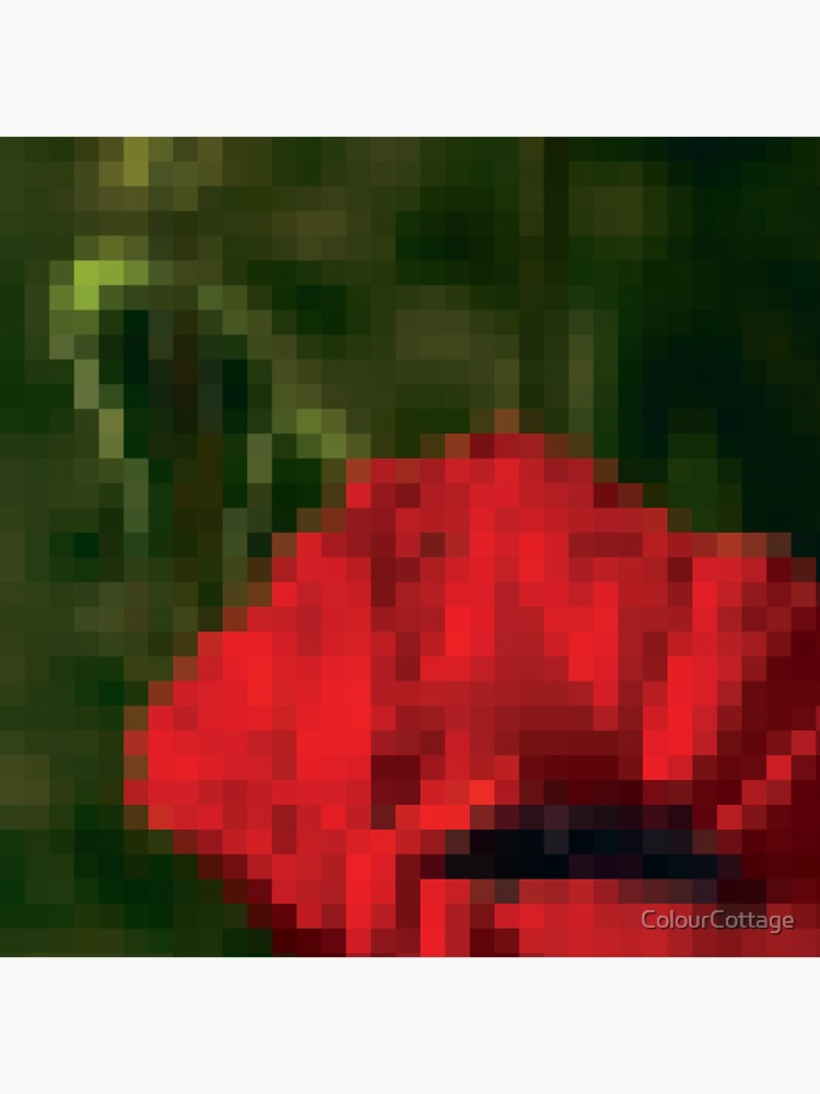 Poppy Abstraction by ColourCottage
