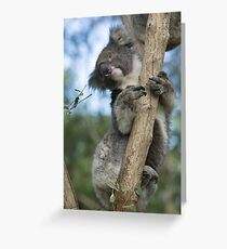 Drop Bear Greeting Card