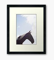 single horse in a field with bright blue skies Framed Print