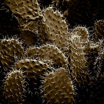 Cactaceae by gardenpictures