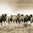 Thundering Hoofbeats by Arla M. Ruggles
