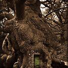 Green door by Terence J Sullivan
