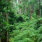 Ferny Forest - Mill Creek NSW by Bev Woodman