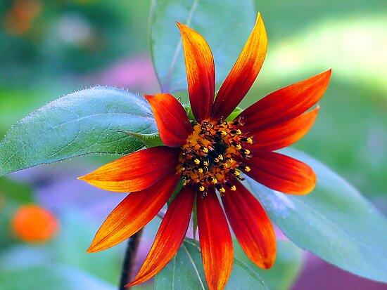 Blooming Flower by Charlotte Hertler