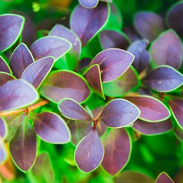 Vibrant green and purple leaves by PLdesign