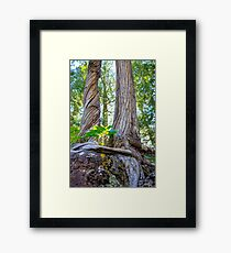 Tree and Roots Framed Print