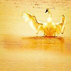 Golden Swan, Rising from the water by Donna Ridgway