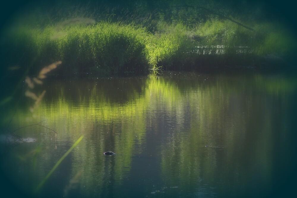 turtle swimming away at Trojan pond, near Goble, Oregon by Dawna Morton