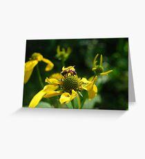Pollen-laden Honeybee Greeting Card
