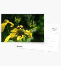 Pollen-laden Honeybee Postcards