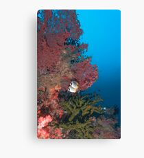 Masked Butterfly Fish Canvas Print