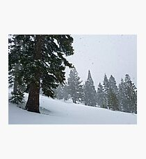 Snowstorm and Forest Photographic Print